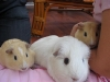 Stevie, Smudge and TJ